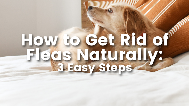 How to Get Rid of Fleas Naturally: 3 Easy Steps