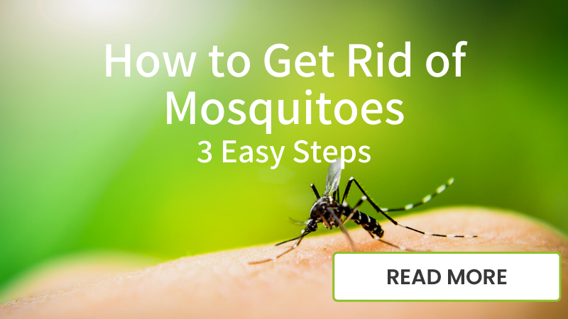 How to Get Rid of Mosquitos blog