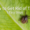 COI-Blog-How-to-Get-Rid-of-Ticks_-3-Easy-Steps-1