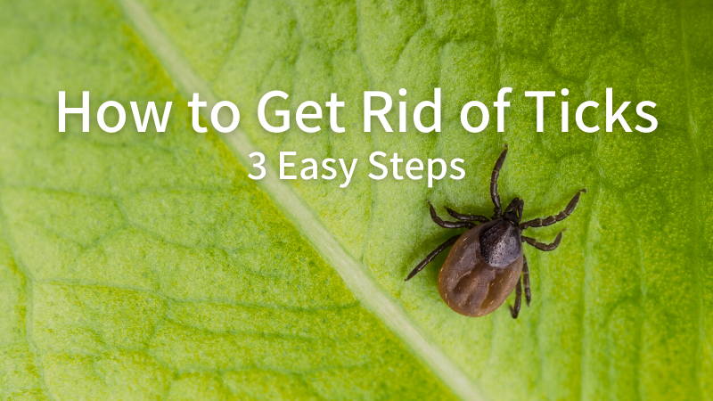 How to Get Rid of Ticks: 3 Easy Steps