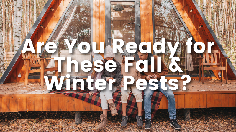 Are You Ready for These Fall & Winter Pests?