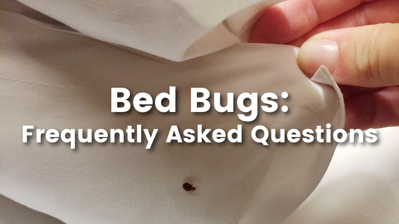 Cedar oil store blog post image, bed bugs: Frequently Asked Questions