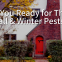 COI-Blog-Are-You-Ready-for-These-Fall-Winter-Pests_