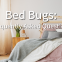 COI-Blog-Bed-Bugs_-Frequently-Asked-Questions