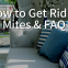 COI Blog - How to Get Rid of Mites & FAQ (1)