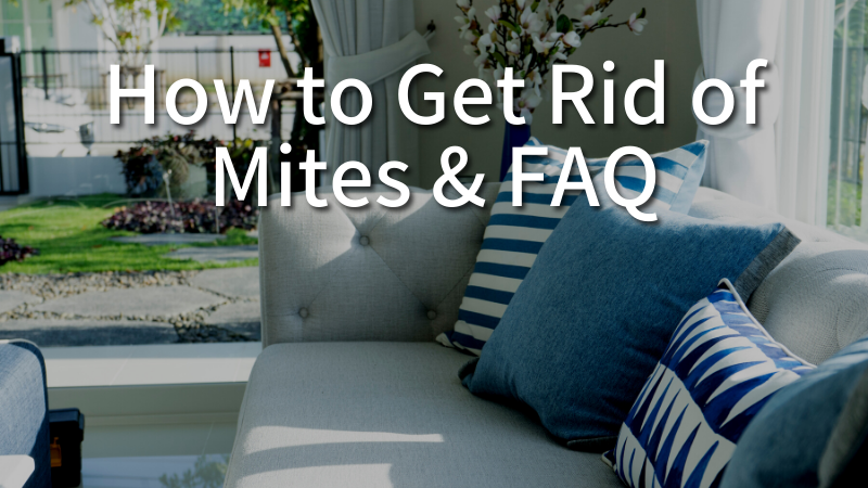 How to Get Rid of Mites & FAQ