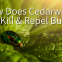 COI-Blog-How-to-Get-Rid-of-Mites-FAQ