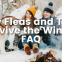 Cedar Oil Store blog post image, how fleas and ticks survive the winter: FAQ