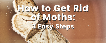Cedar oil store blog image, How to get rid of moths: 3 easy steps