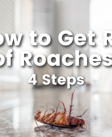Cedar oil store blog post image, how to get rid of roaches: 4 steps