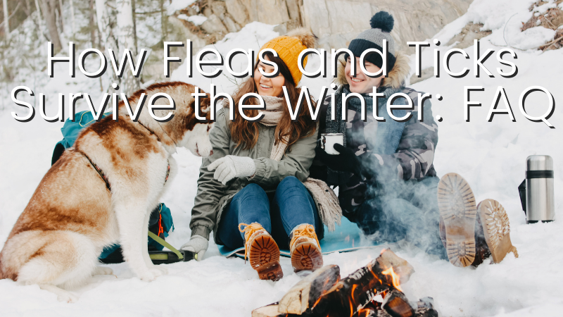 How Fleas & Ticks Survive the Winter: Frequently Asked Questions